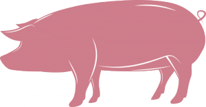 cochon_illustr